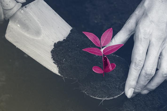 pessoa-plantando-flor